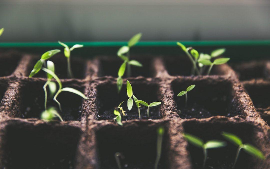 Breaking Through a Growth Edge